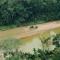 ¿Sobrevivirá la Amazonía al cambio climático?