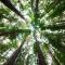 ¿Cuántos árboles hacen falta para proveernos de oxígeno?