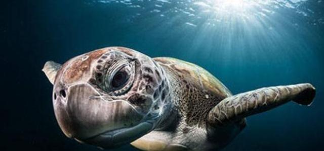 La primera solución ecológica para combatir la contaminación plástica de los océanos ya está aquí