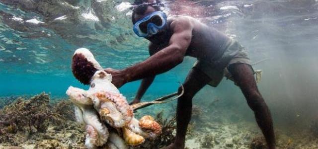 Francia prepara la creación del área marina protegida más grande del mundo